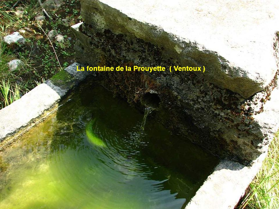 La fontaine de la Prouyette ( Ventoux )