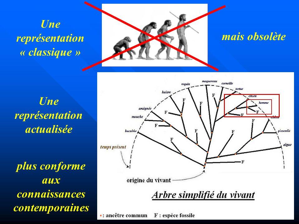 Une représentation « classique » Une représentation actualisée mais obsolète plus conforme aux connaissances contemporaines