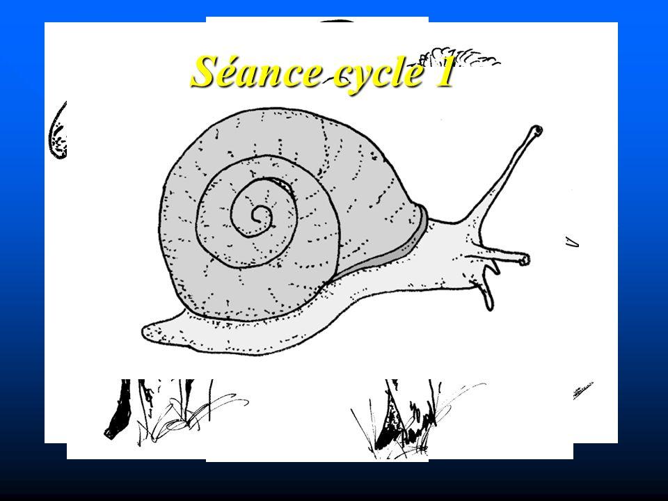 Séance cycle 1