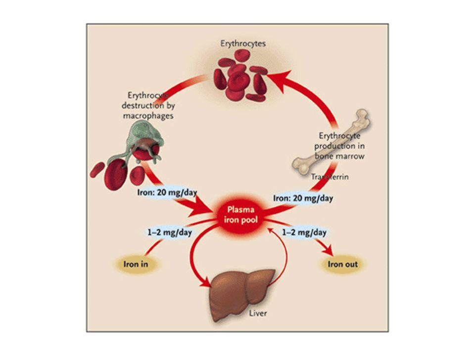 Microcytose Déficit en fer Maladie chronique Hémoglobinopathies –Thalassémies –Anémie falciforme –Hémoglobine E,C Anémie sidéroblastique Intoxication
