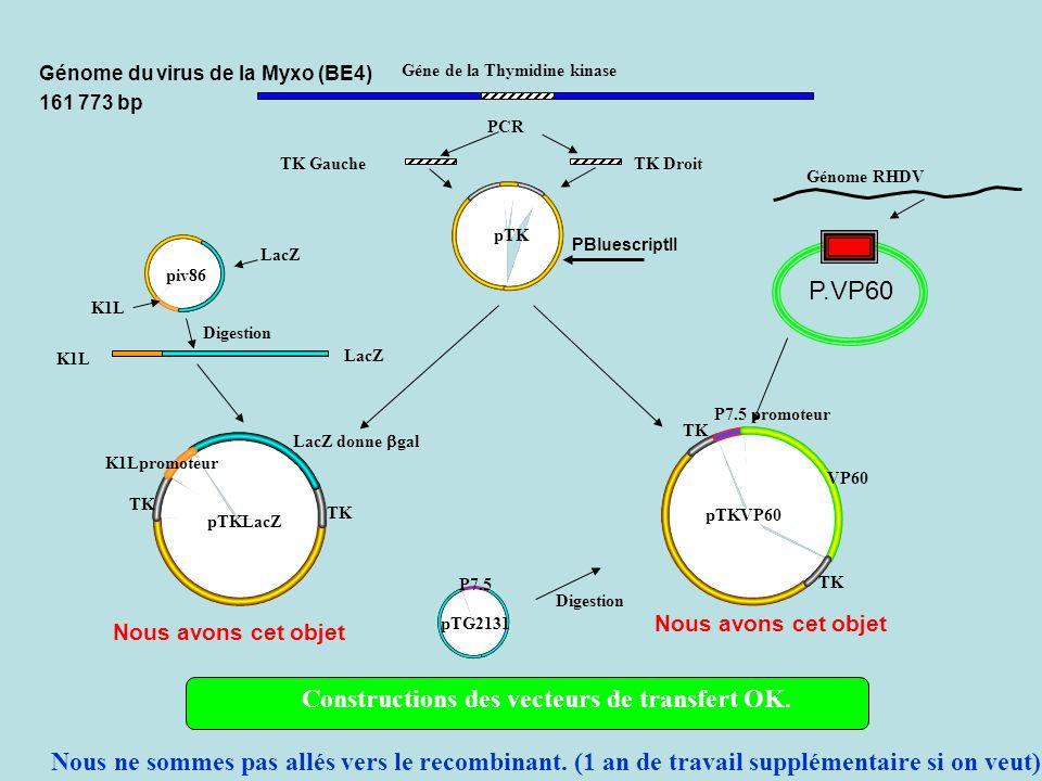 Géne de la Thymidine kinase PCR TK GaucheTK Droit K1L LacZ piv86 K1L LacZ Génome RHDV pTG2131 pTKLacZ pTKVP60 Digestion Constructions des vecteurs de transfert OK.