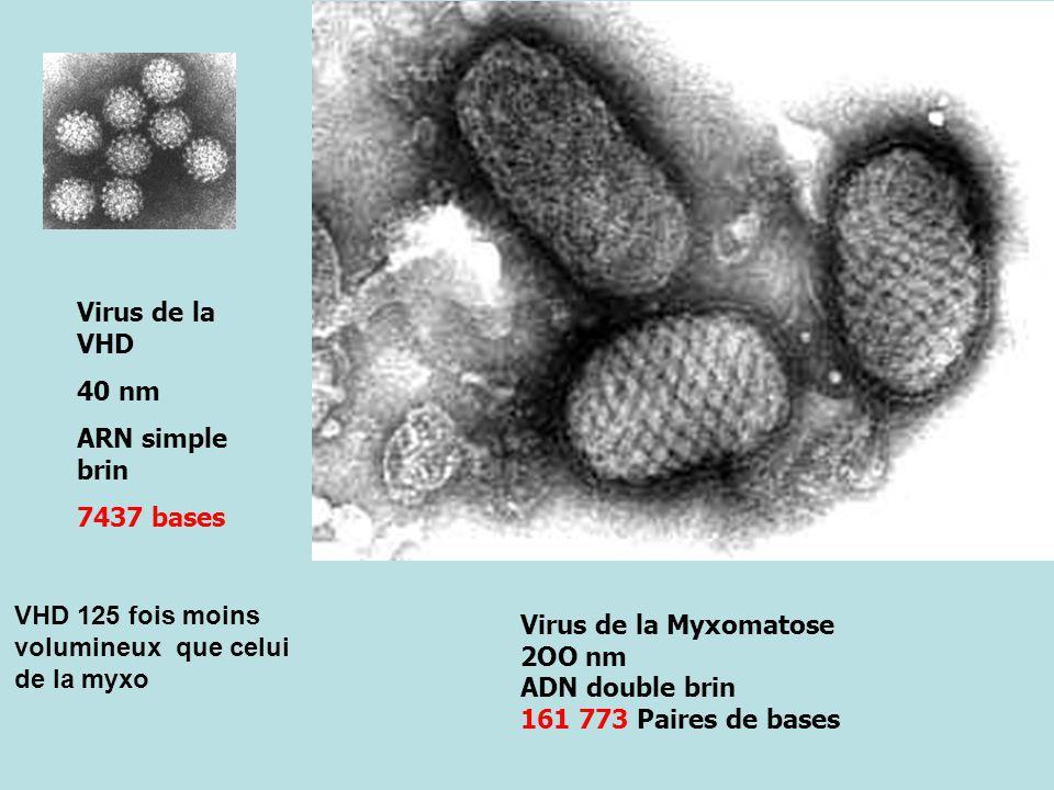 Virus de la Myxomatose 2OO nm ADN double brin 161 773 Paires de bases Virus de la VHD 40 nm ARN simple brin 7437 bases VHD 125 fois moins volumineux que celui de la myxo