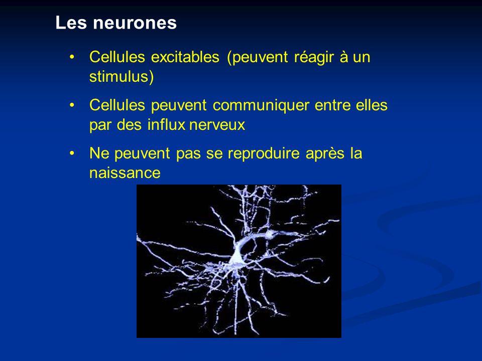 Cellules excitables (peuvent réagir à un stimulus) Cellules peuvent communiquer entre elles par des influx nerveux Ne peuvent pas se reproduire après