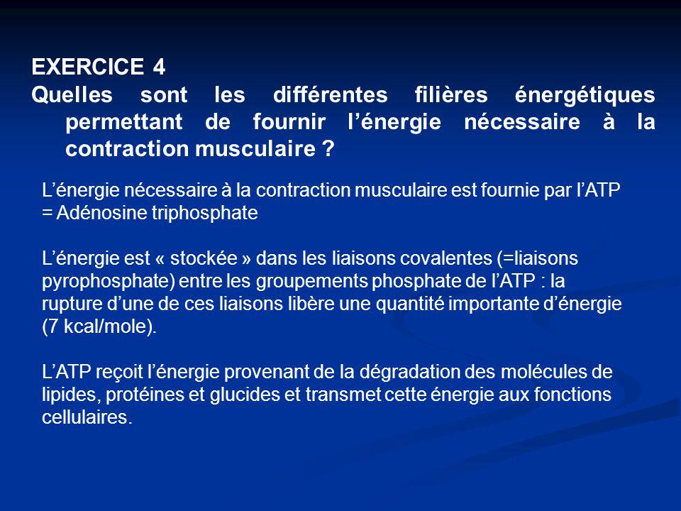 EXERCICE 4 Quelles sont les différentes filières énergétiques permettant de fournir l'énergie nécessaire à la contraction musculaire ? L'énergie néces