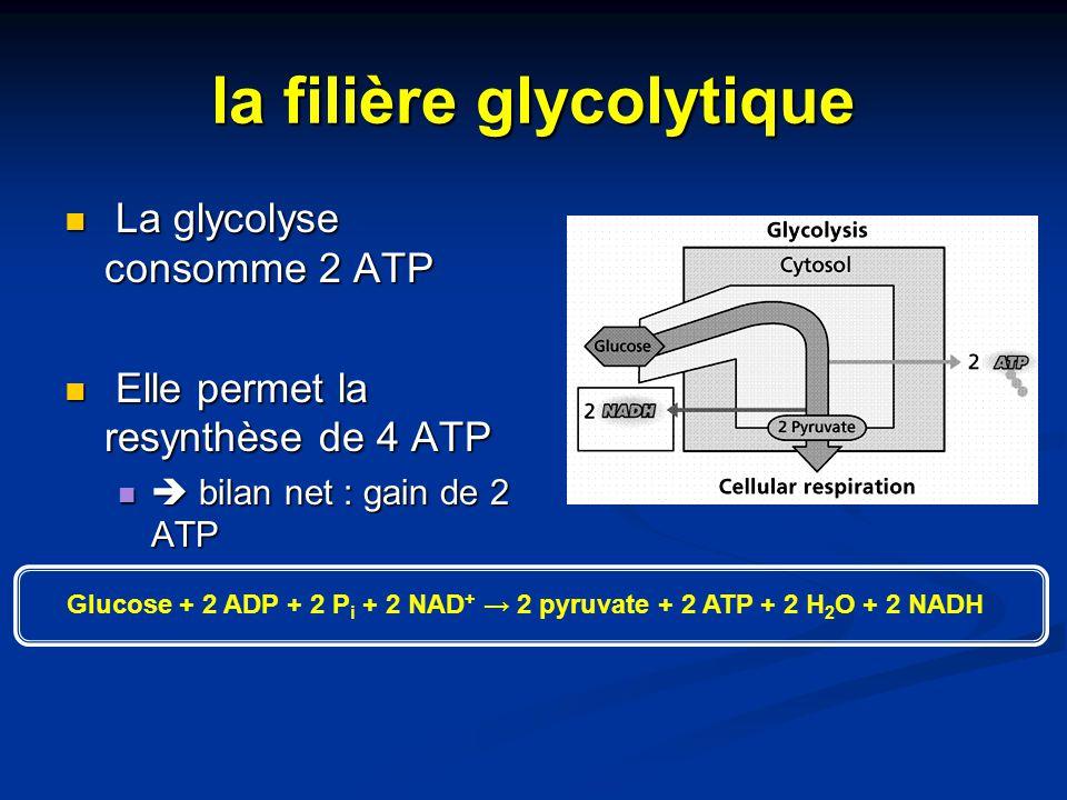 la filière glycolytique La glycolyse consomme 2 ATP La glycolyse consomme 2 ATP Elle permet la resynthèse de 4 ATP Elle permet la resynthèse de 4 ATP