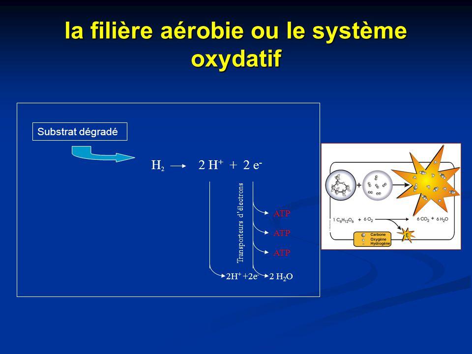 Substrat dégradé H2H2 2 H + + 2 e - 2 H 2 O ATP Transporteurs d'électrons