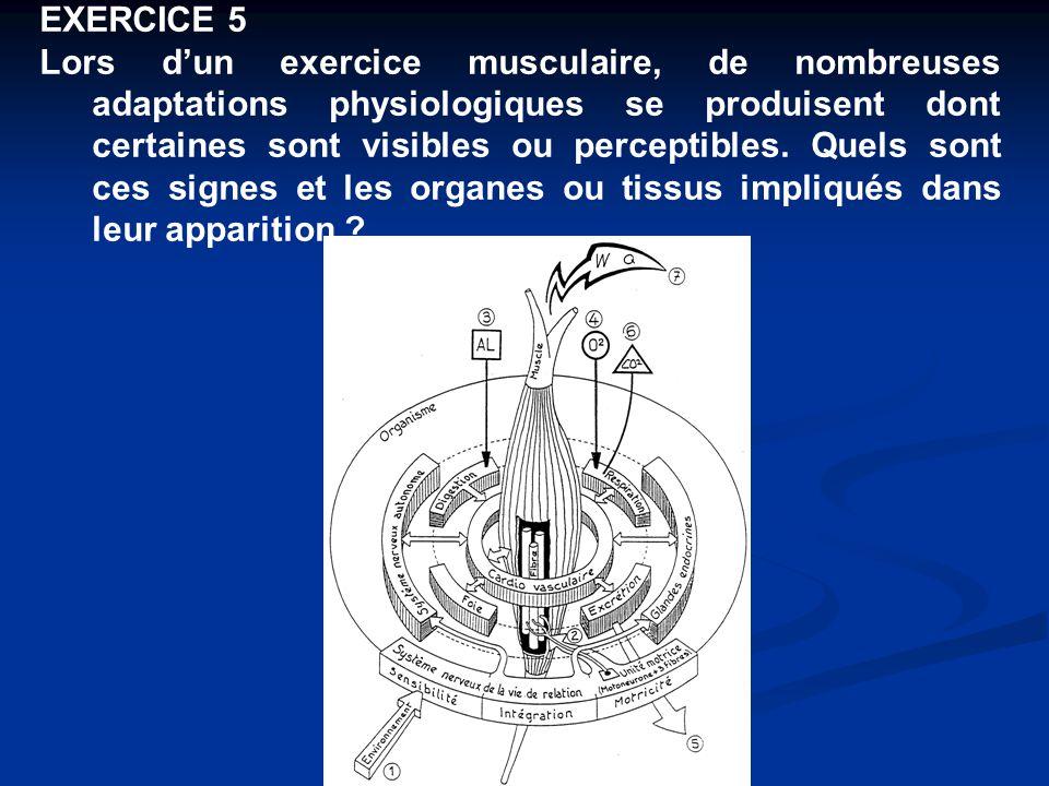 EXERCICE 5 Lors d'un exercice musculaire, de nombreuses adaptations physiologiques se produisent dont certaines sont visibles ou perceptibles. Quels s