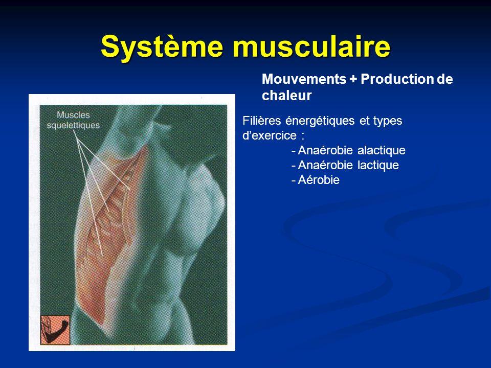 Système musculaire Mouvements + Production de chaleur Filières énergétiques et types d'exercice : - Anaérobie alactique - Anaérobie lactique - Aérobie