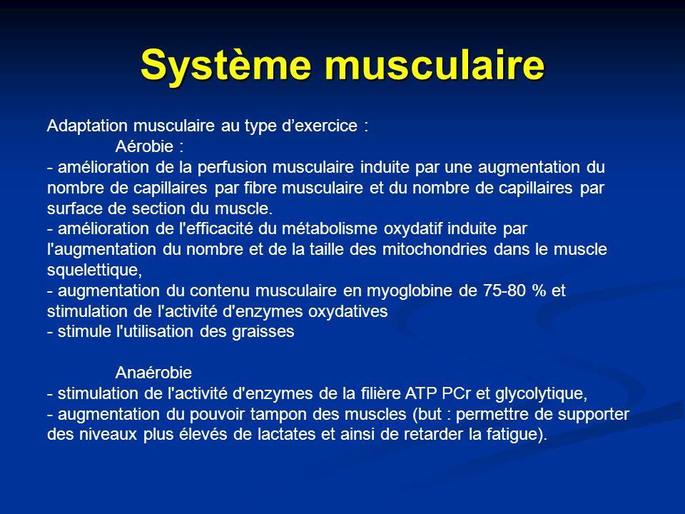 Système musculaire Adaptation musculaire au type d'exercice : Aérobie : - amélioration de la perfusion musculaire induite par une augmentation du nomb