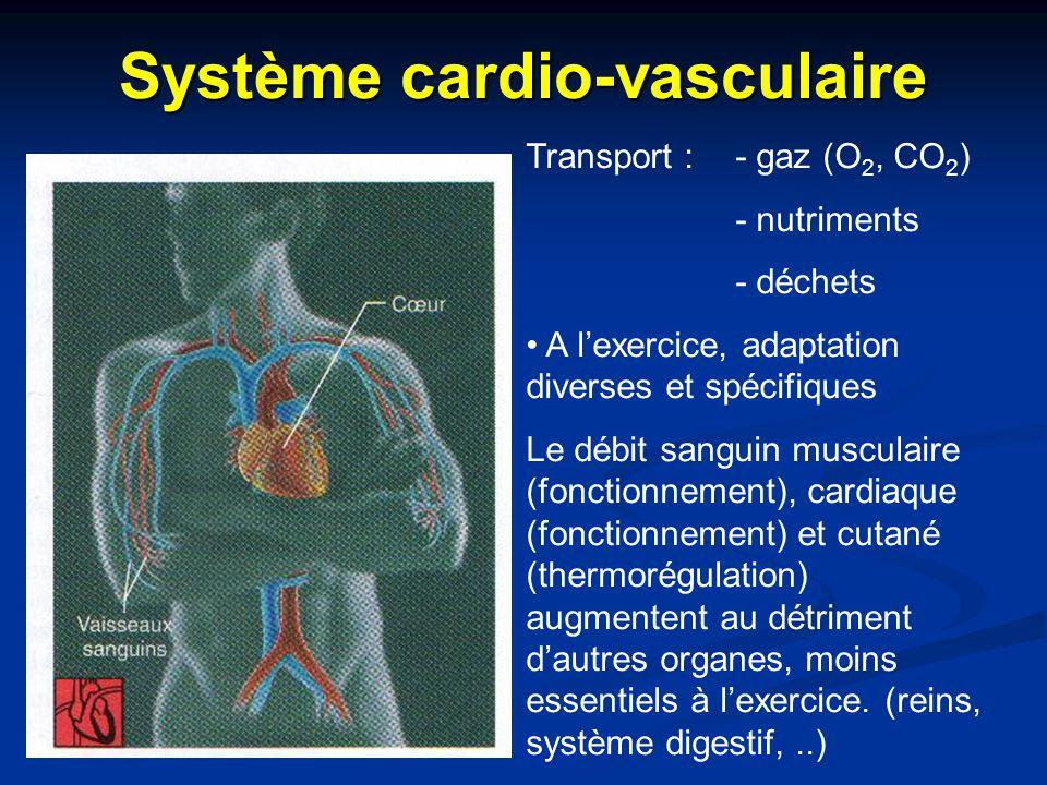 Système cardio-vasculaire Transport : - gaz (O 2, CO 2 ) - nutriments - déchets A l'exercice, adaptation diverses et spécifiques Le débit sanguin musc