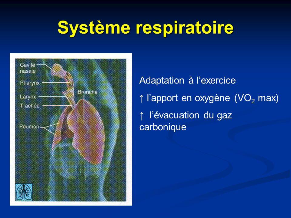 Système respiratoire Adaptation à l'exercice ↑ l'apport en oxygène (VO 2 max) ↑ l'évacuation du gaz carbonique