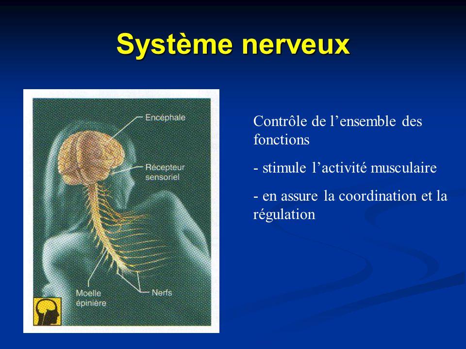 Système nerveux Contrôle de l'ensemble des fonctions - stimule l'activité musculaire - en assure la coordination et la régulation