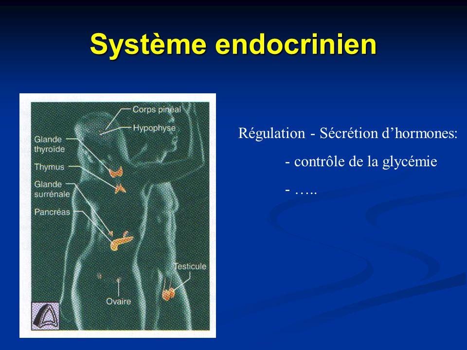 Système endocrinien Régulation - Sécrétion d'hormones: - contrôle de la glycémie - …..