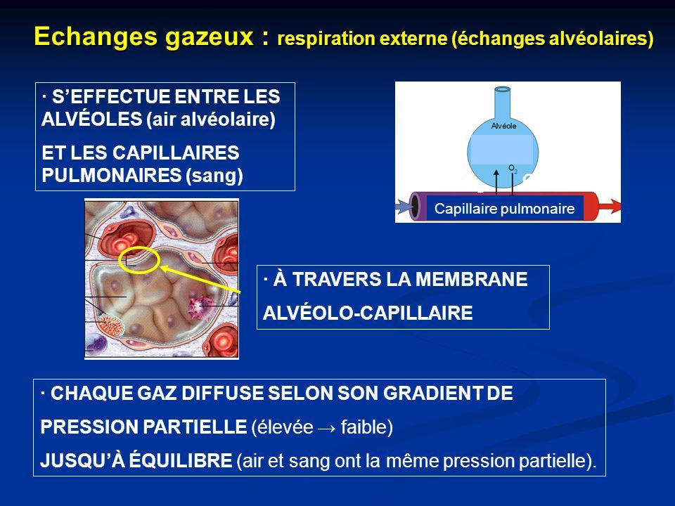 · À TRAVERS LA MEMBRANE ALVÉOLO-CAPILLAIRE Echanges gazeux : respiration externe (échanges alvéolaires) Capillaire pulmonaire · CHAQUE GAZ DIFFUSE SEL
