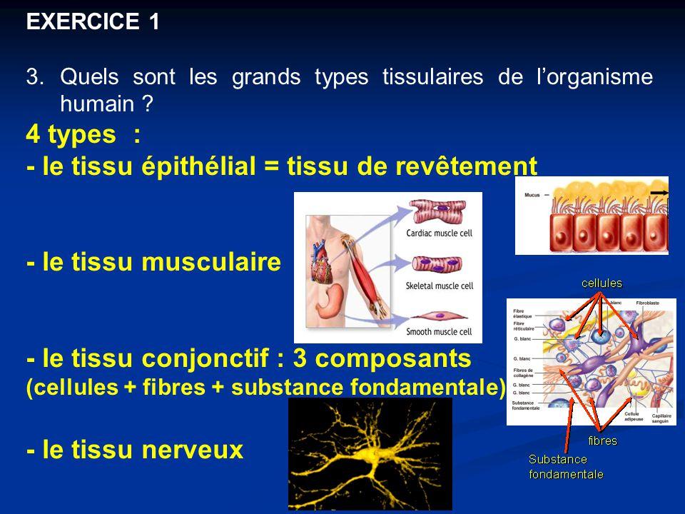 EXERCICE 1 3.Quels sont les grands types tissulaires de l'organisme humain ? 4 types : - le tissu épithélial = tissu de revêtement - le tissu musculai
