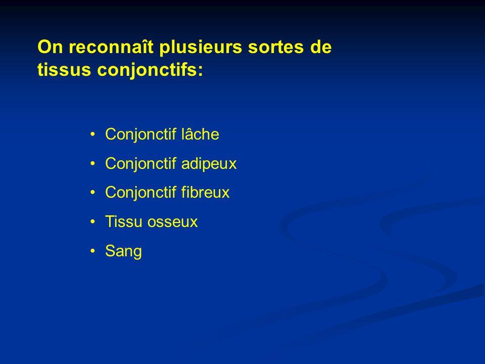On reconnaît plusieurs sortes de tissus conjonctifs: Conjonctif lâche Conjonctif adipeux Conjonctif fibreux Tissu osseux Sang