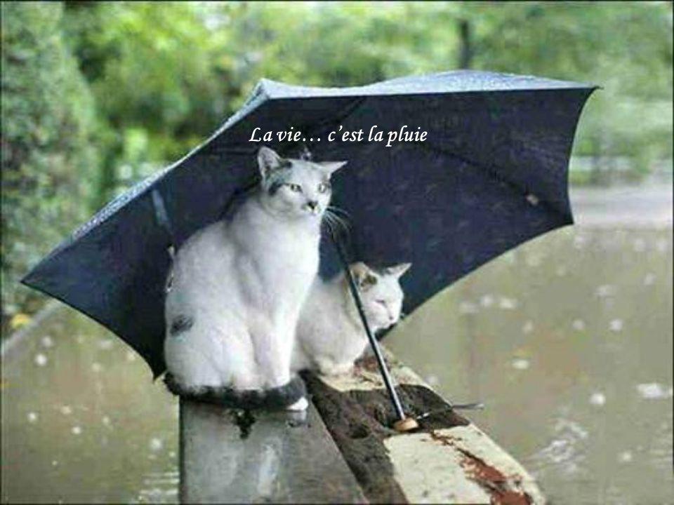 La vie… c'est la pluie