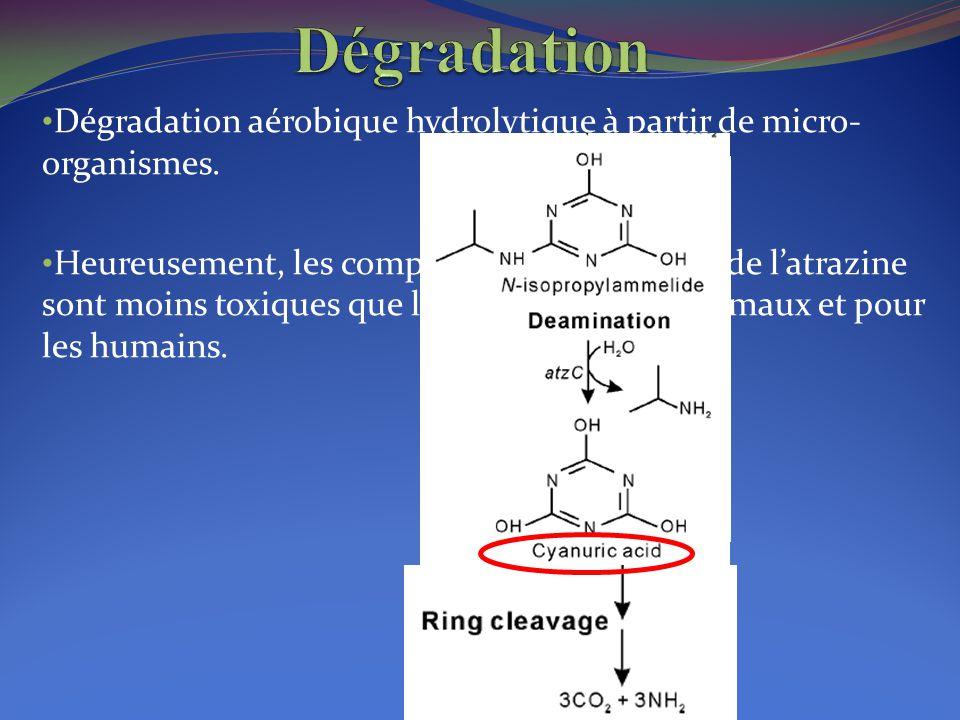 Dégradation aérobique hydrolytique à partir de micro- organismes. Heureusement, les composés de dégradation de l'atrazine sont moins toxiques que l'at