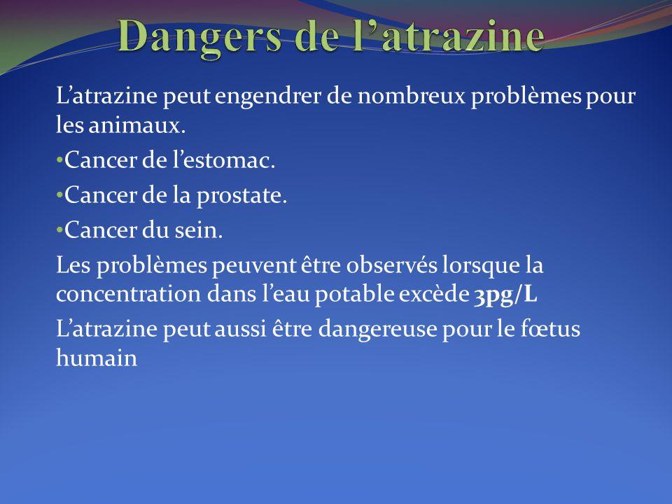 L'atrazine peut engendrer de nombreux problèmes pour les animaux. Cancer de l'estomac. Cancer de la prostate. Cancer du sein. Les problèmes peuvent êt