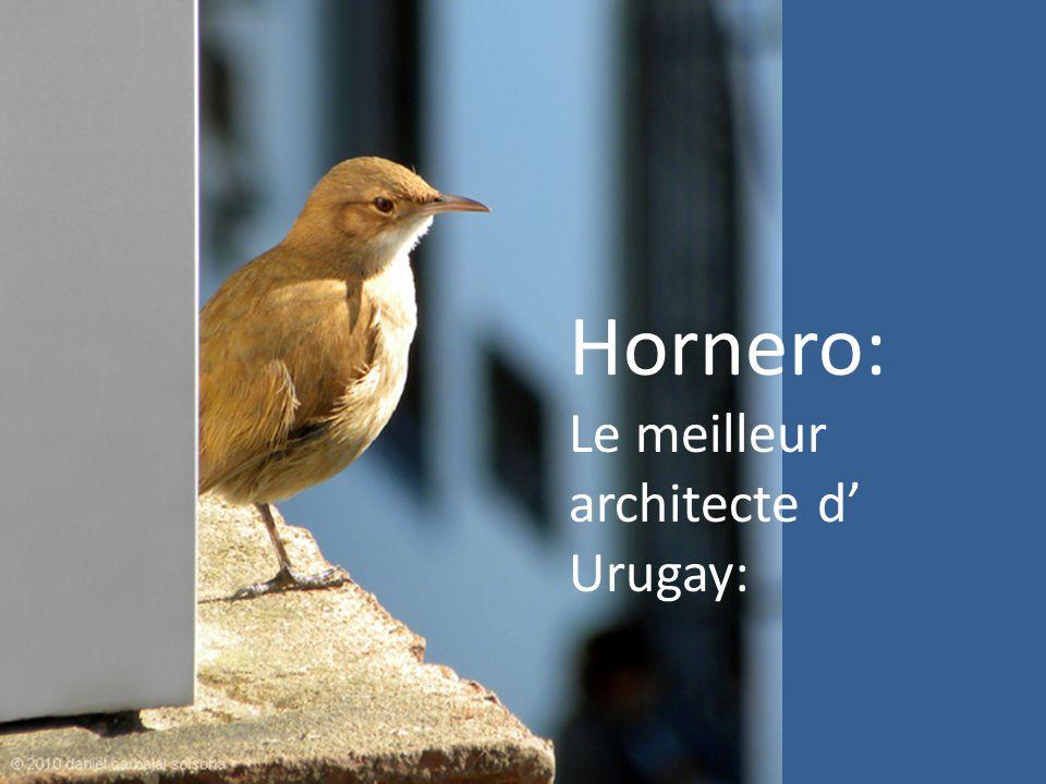 Urban Horneros En Uruguay, nous avons l habitude de voir des nids Horneros partout, ce nid particulié a été construit sur une fenêtre dans l immeuble où je vis.
