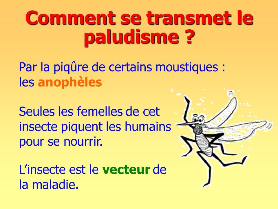 Par la piqûre de certains moustiques : les anophèles Comment se transmet le paludisme .
