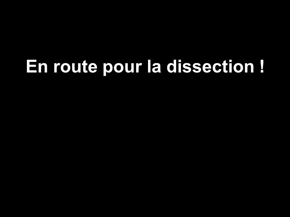 III La Mémoire : La Mémoire Morte ou R.O.M.