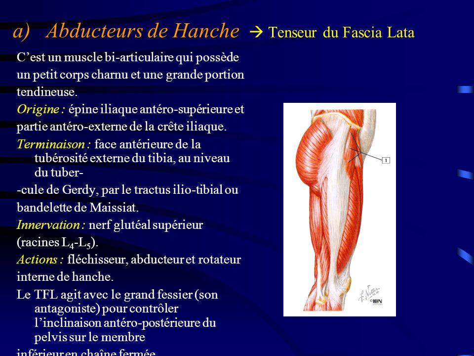 a) Abducteurs de Hanche a) Abducteurs de Hanche  Tenseur du Fascia Lata C'est un muscle bi-articulaire qui possède un petit corps charnu et une grand