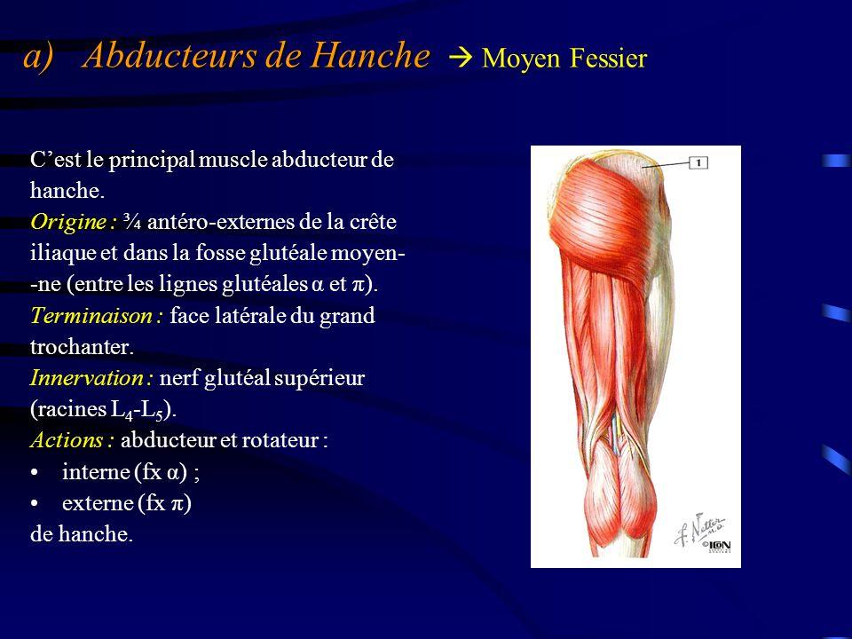 a) Abducteurs de Hanche a) Abducteurs de Hanche  Moyen Fessier Le moyen fessier participe à la stabilité du bassin en chaîne fermée (le pied est au sol), en particulier en appui unipodal.