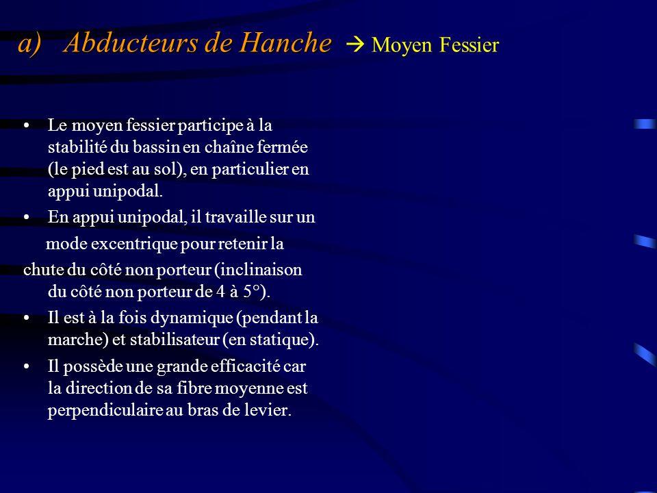 a) Abducteurs de Hanche a) Abducteurs de Hanche  Petit Fessier Après le moyen fessier, c'est le muscle abducteur de la hanche.