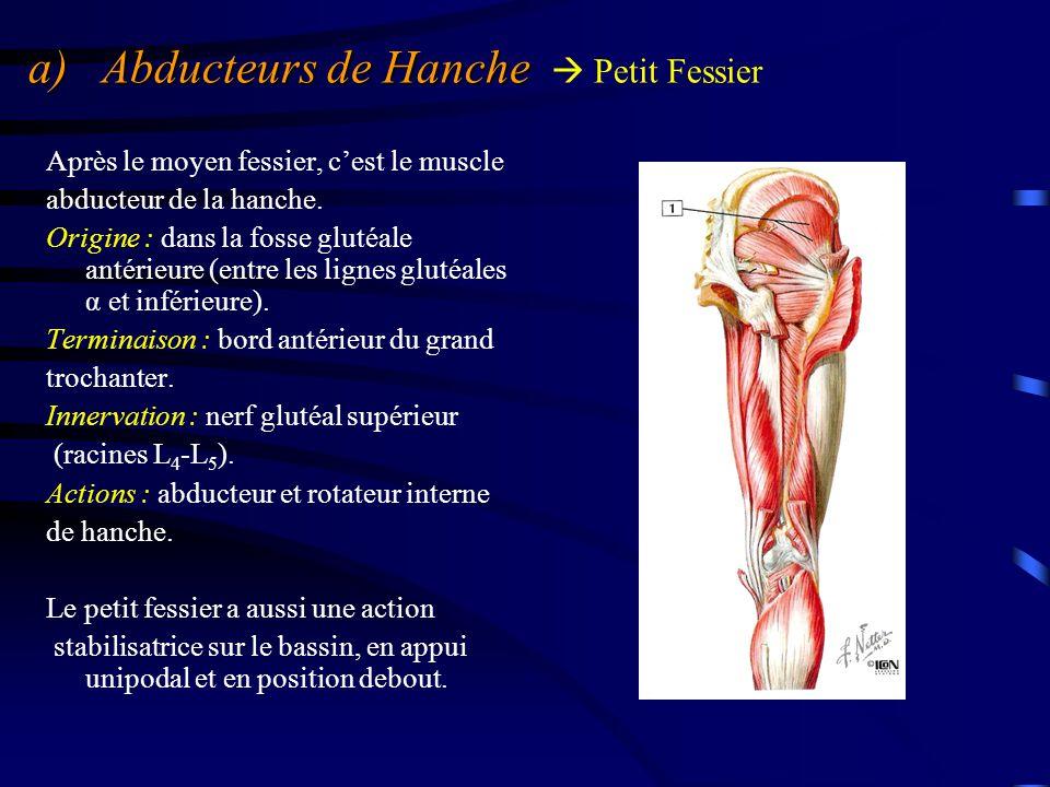 a) Abducteurs de Hanche a) Abducteurs de Hanche  Petit Fessier Après le moyen fessier, c'est le muscle abducteur de la hanche. Origine : dans la foss