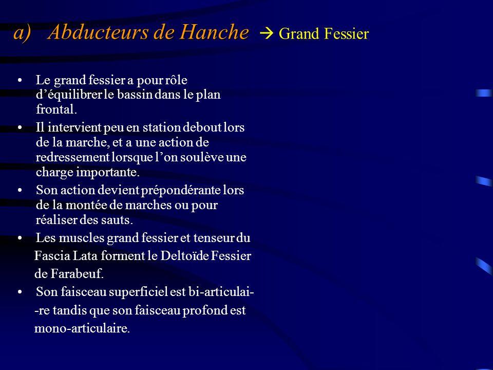a) Abducteurs de Hanche a) Abducteurs de Hanche  Grand Fessier Le grand fessier a pour rôle d'équilibrer le bassin dans le plan frontal. Il intervien