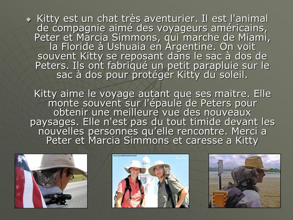  Kitty est un chat très aventurier. Il est l'animal de compagnie aimé des voyageurs américains, Peter et Marcia Simmons, qui marche de Miami, la Flor