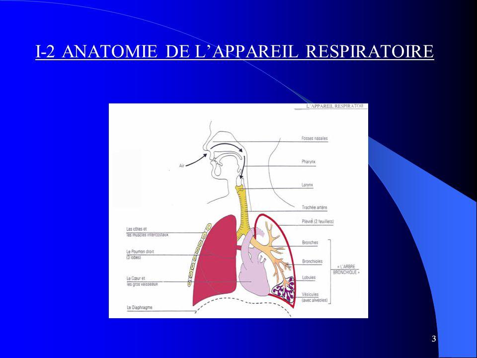 3 I-2 ANATOMIE DE L'APPAREIL RESPIRATOIRE