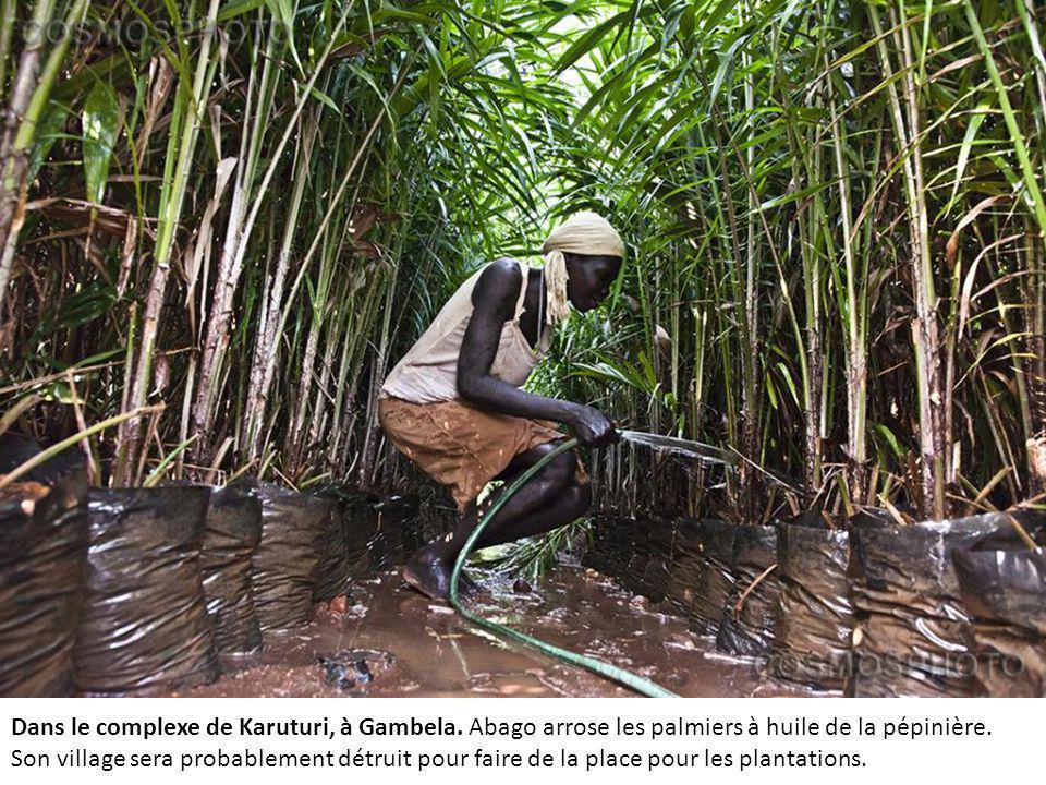 Dans le complexe de Karuturi, à Gambela.Abago arrose les palmiers à huile de la pépinière.