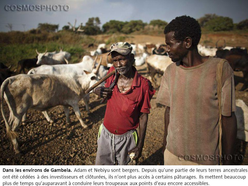 Dans les environs de Gambela.Adam et Nebiyu sont bergers.