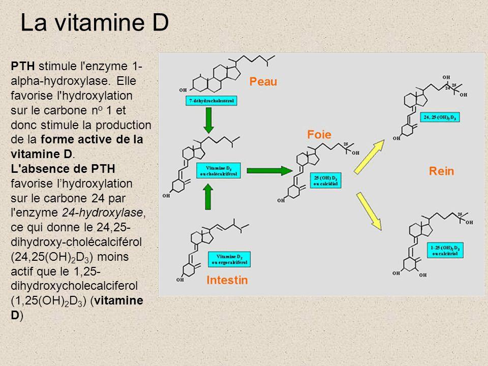 La vitamine D PTH stimule l'enzyme 1- alpha-hydroxylase. Elle favorise l'hydroxylation sur le carbone n o 1 et donc stimule la production de la forme