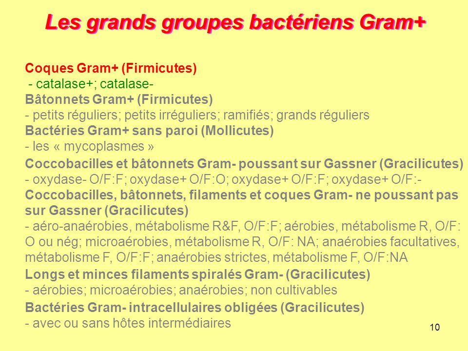 10 Les grands groupes bactériens Gram+ Longs et minces filaments spiralés Gram- (Gracilicutes) - aérobies; microaérobies; anaérobies; non cultivables