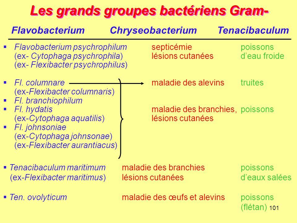 101 Les grands groupes bactériens Gram-  Flavobacterium psychrophilumsepticémiepoissons (ex- Cytophaga psychrophila)lésions cutanéesd'eau froide (ex-