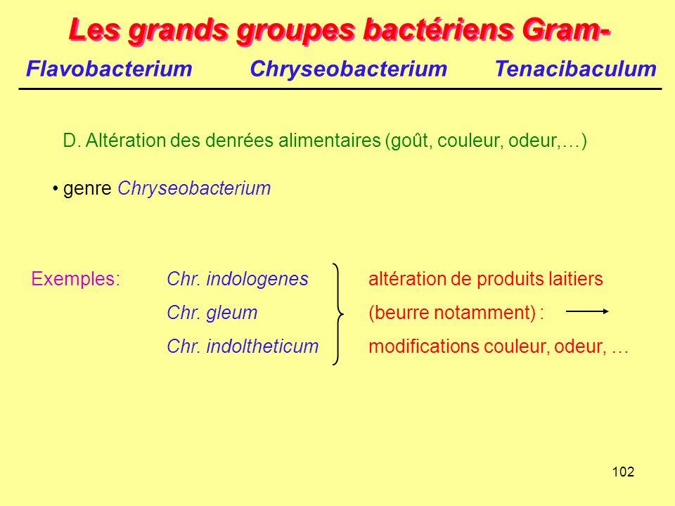 102 Les grands groupes bactériens Gram- D. Altération des denrées alimentaires (goût, couleur, odeur,…) genre Chryseobacterium Exemples:Chr. indologen