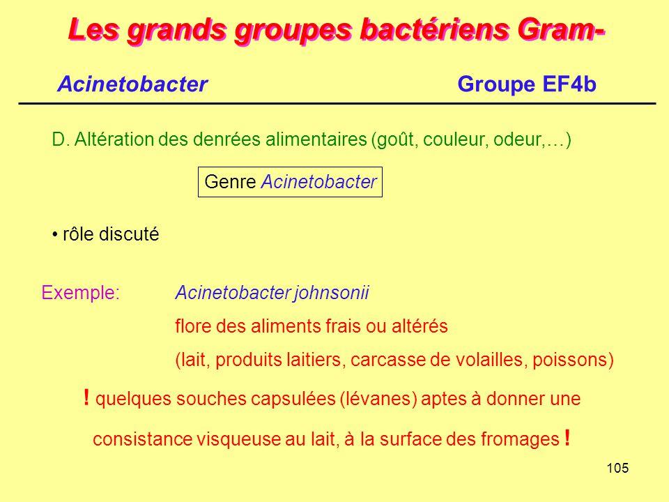 105 Les grands groupes bactériens Gram- D. Altération des denrées alimentaires (goût, couleur, odeur,…) Genre Acinetobacter rôle discuté Exemple:Acine