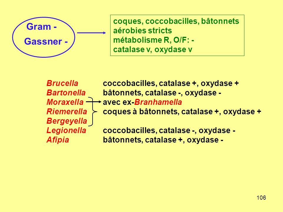 106 Brucellacoccobacilles, catalase +, oxydase + Bartonellabâtonnets, catalase -, oxydase - Moraxella avec ex-Branhamella Riemerellacoques à bâtonnets