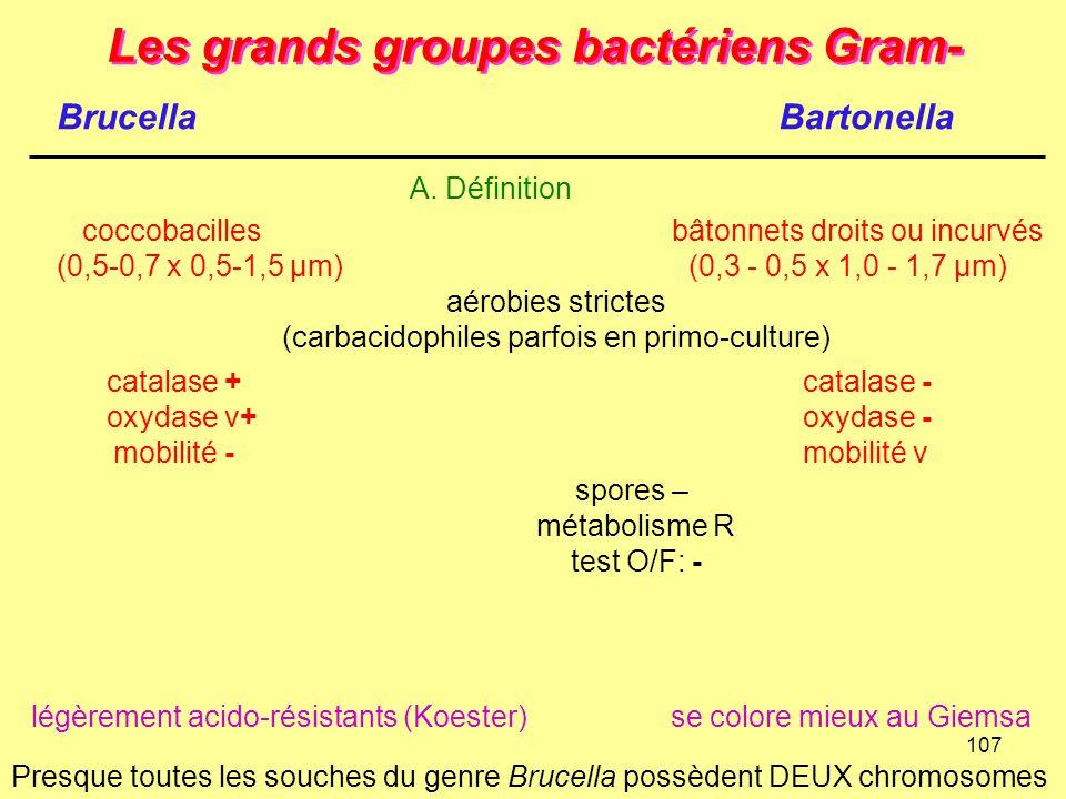 107 Les grands groupes bactériens Gram- BrucellaBartonella A. Définition coccobacilles bâtonnets droits ou incurvés (0,5-0,7 x 0,5-1,5 µm)(0,3 - 0,5 x