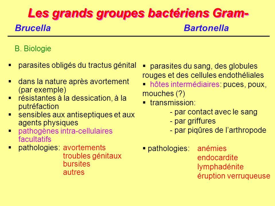 Les grands groupes bactériens Gram-  parasites obligés du tractus génital  dans la nature après avortement (par exemple)  résistantes à la dessicat