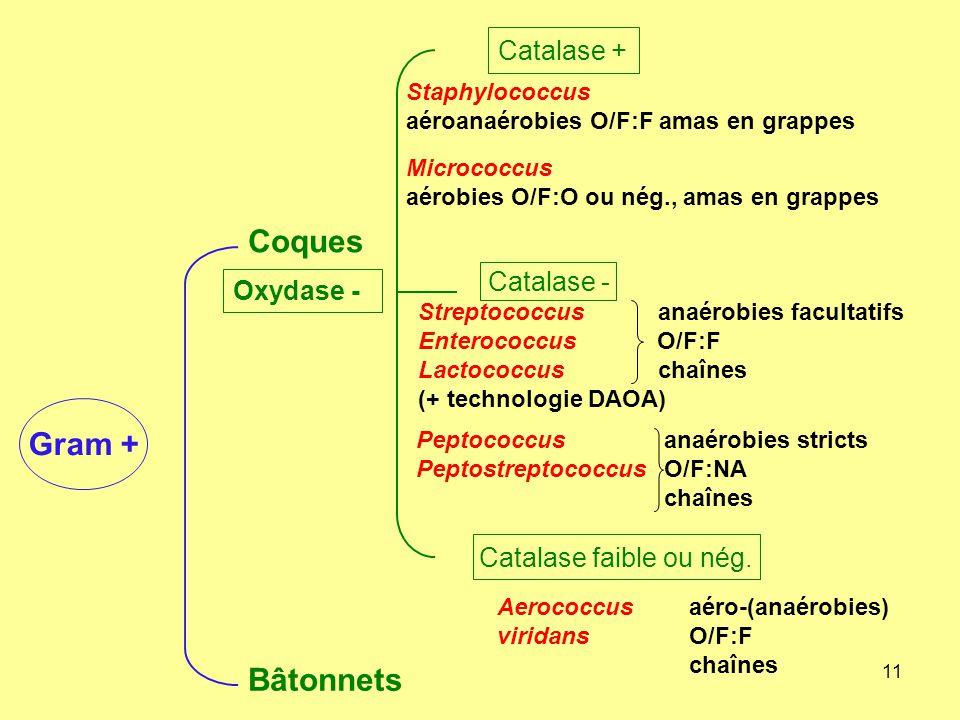 11 Coques Bâtonnets Staphylococcus aéroanaérobies O/F:F amas en grappes Micrococcus aérobies O/F:O ou nég., amas en grappes Streptococcus anaérobies f