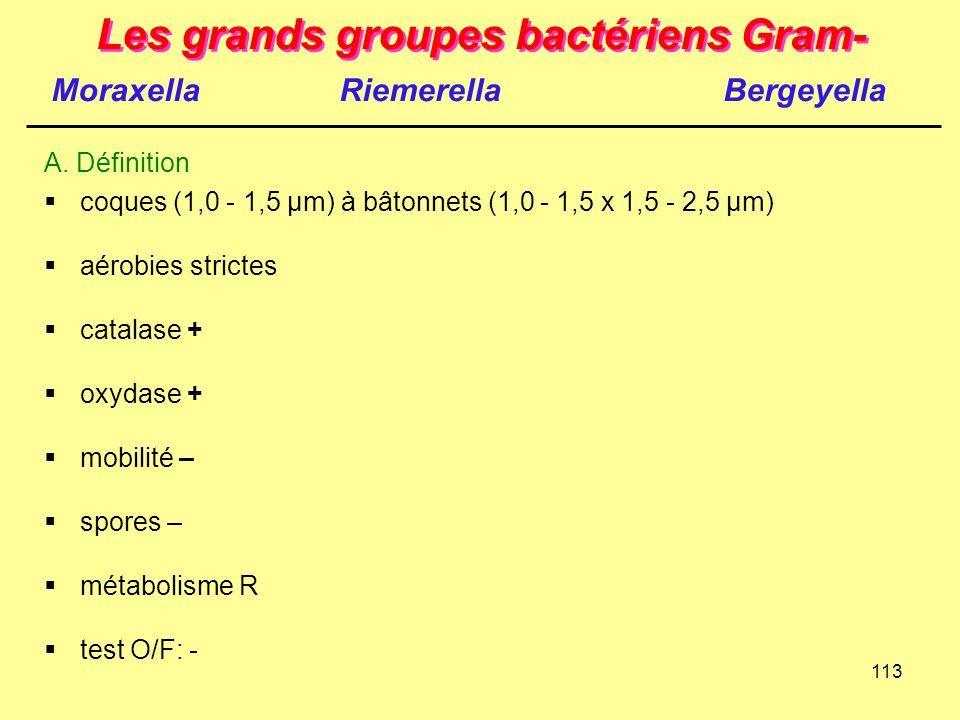 113 Les grands groupes bactériens Gram-  coques (1,0 - 1,5 µm) à bâtonnets (1,0 - 1,5 x 1,5 - 2,5 µm)  aérobies strictes  catalase +  oxydase + 