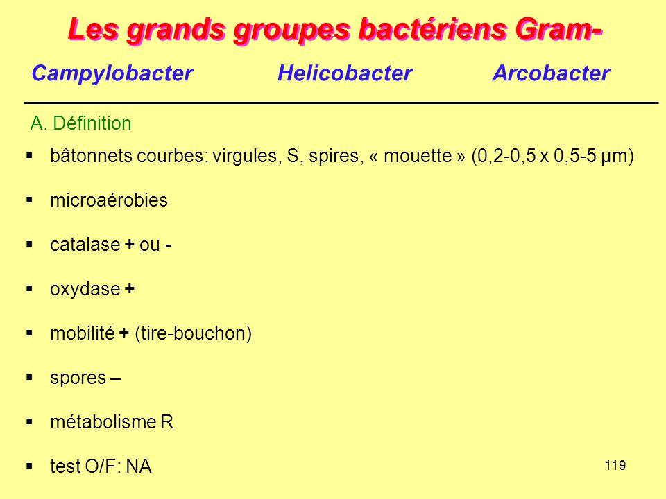 119 Les grands groupes bactériens Gram-  bâtonnets courbes: virgules, S, spires, « mouette » (0,2-0,5 x 0,5-5 µm)  microaérobies  catalase + ou - 