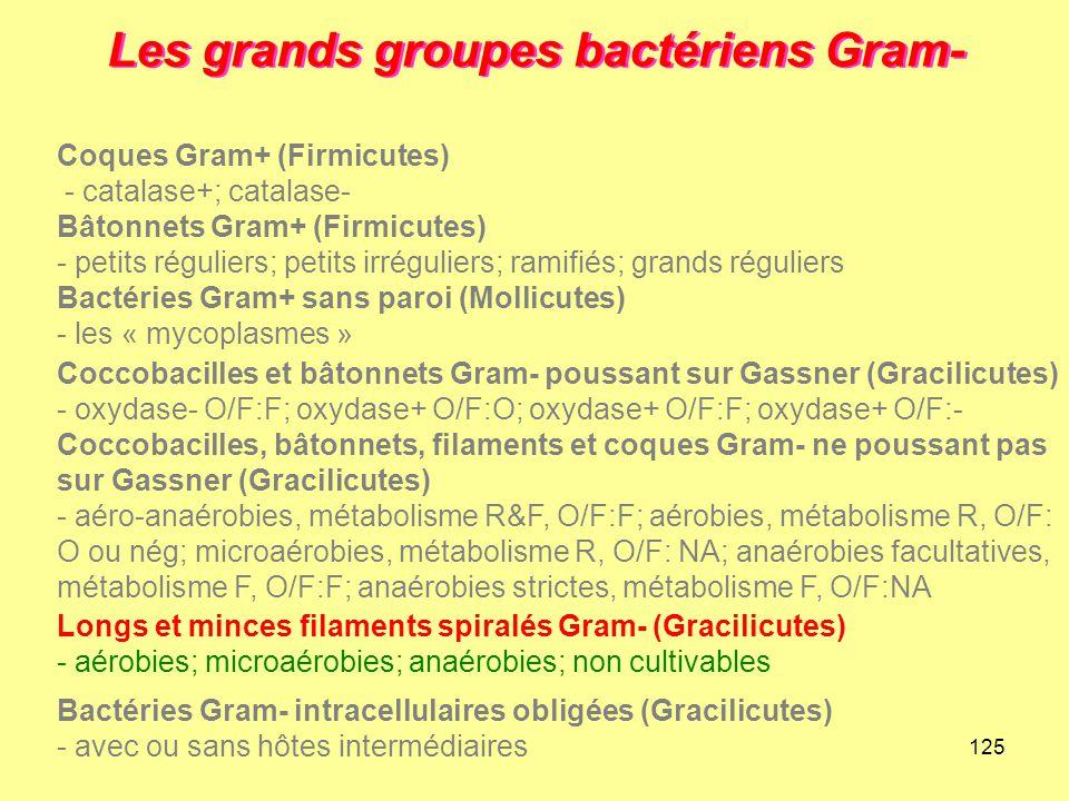 125 Les grands groupes bactériens Gram- Longs et minces filaments spiralés Gram- (Gracilicutes) - aérobies; microaérobies; anaérobies; non cultivables