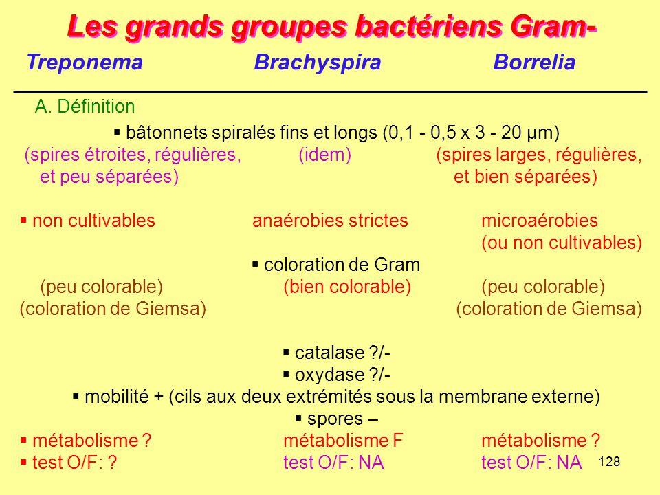 128 Les grands groupes bactériens Gram- A. Définition  bâtonnets spiralés fins et longs (0,1 - 0,5 x 3 - 20 µm) (spires étroites, régulières, (idem)