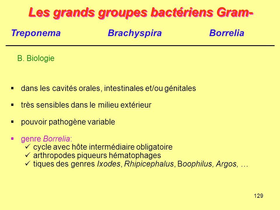 129 Les grands groupes bactériens Gram-  dans les cavités orales, intestinales et/ou génitales  très sensibles dans le milieu extérieur  pouvoir pa