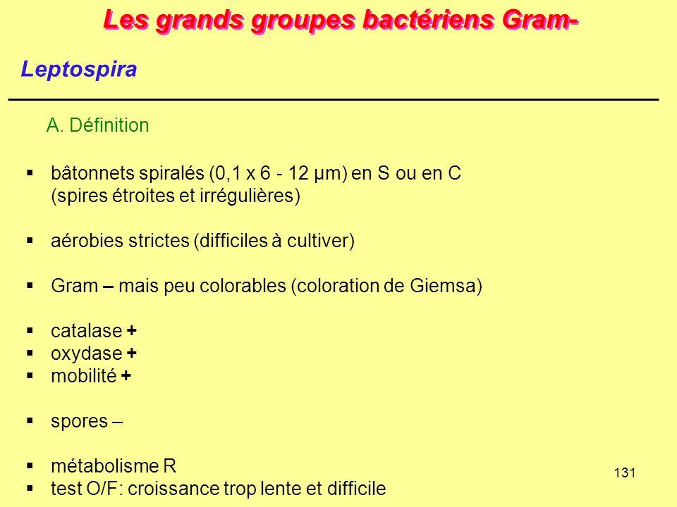 131 Les grands groupes bactériens Gram-  bâtonnets spiralés (0,1 x 6 - 12 µm) en S ou en C (spires étroites et irrégulières)  aérobies strictes (dif